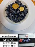 Кондитерский подсолнечник Джинн. Урожайный сорт Джин 35-37ц/га. Масса 120гр/100шт. Фракция 4+., фото 2