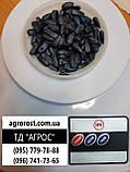 Кондитерский подсолнечник Джинн. Урожайный сорт Джин 35-37ц/га. Масса 120гр/100шт. Фракция 4+., фото 3