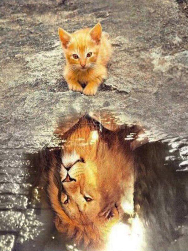Алмазная вышивка мозаика Diy Милый котик в душе - лев. Отражение 30х40см 35цветов полная зашивка квадратные