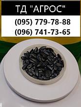 Насіння кондитерського соняшнику Джин. Ранній соняшник Джин 85-90 днів з урожайністю 32-35ц/га 1 р-я