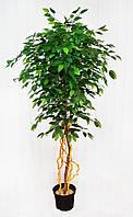 Дерево штучне Фікус з світлими стовбурами