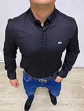 Классическая рубашка черного цвета Lacoste ( реплика)