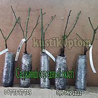 Гранатовий Браслет (среднее качество), фото 5