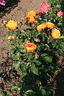 Солнечная Девочка (среднее качество), фото 3