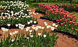 Садовая бордюрная лента   Альта-Профиль расширенная 0,5х150х9000 мм коричневый, фото 7