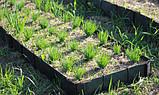 Лента бордюрная для огорода  0,65х150х9000 мм зеленая, фото 8