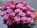 Роза ( новинка )чайно-гибридная Deep Purple, фото 2