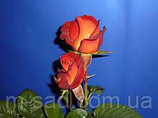 Роза КОФЕ БРЕЙК (срезочный сорт), фото 2