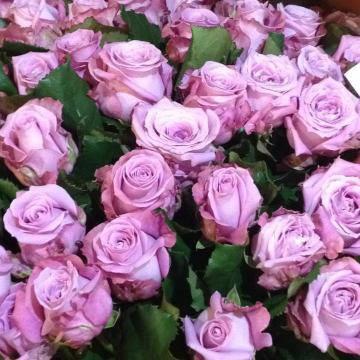 Роза ч/г Меритим, фото 2