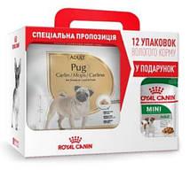 Royal Canin (Роял Канин) Pug Adult - Сухой корм для взрослых мопсов 3 кг + 12 паучей