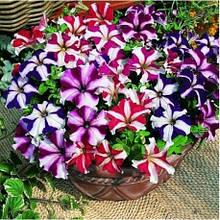 Семена цветов Петуния Тритуния 1000 др. (Syngenta)
