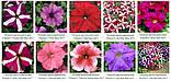 Семена цветов Петуния Тритуния 1000 др. (Syngenta), фото 3