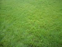 Газон универсальный для  отдыхаТравы газонные в Украине, Купить, Цена, Фото Трава газонная