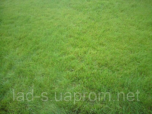 Семена для озеленения - ФХ «ЛАД-С» в Киеве