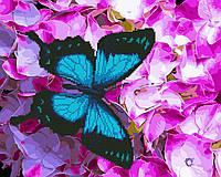 Картина по номерам Brushme Картина по номерам Brushme Бабочка на цветах