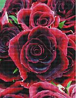 Алмазная мозаика Brushme Алые розы
