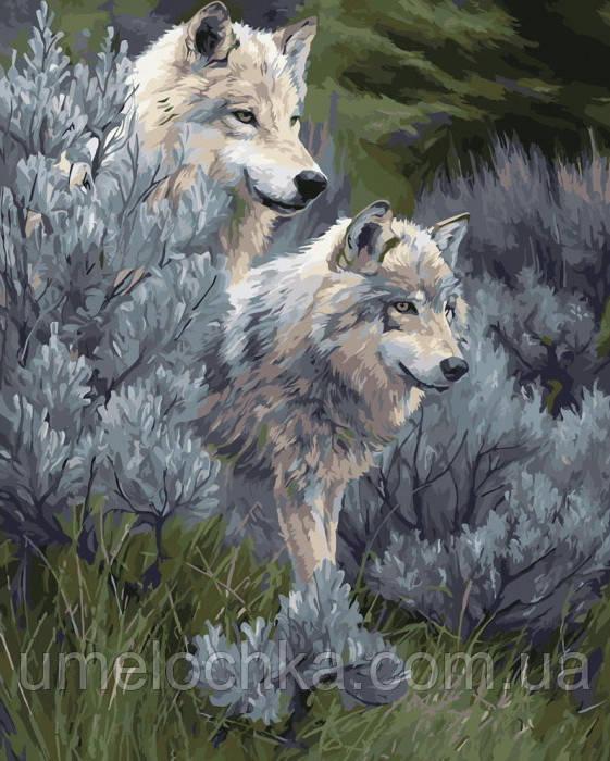 Картина за номерами Вовки в степу (KH2435) 40 х 50 см