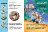 Книга Совы и другие ночные животные. Познавательные истории, фото 2