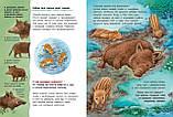Книга Совы и другие ночные животные. Познавательные истории, фото 3