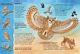 Книга Совы и другие ночные животные. Познавательные истории, фото 5