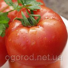 Полбіг F1 10 шт насіння томату низькорослого Bejo, Голландія