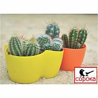 Вазон для цветов Алеана Кактус желтый на 3 растения 1,1л (Горшок для фиалок на три растения пластиковый), фото 2