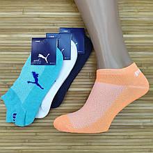 20014292 Шкарпетки жіночі з сіткою короткі SPORT P Туреччина, р. 36-41, кольорове асорті, 20014308
