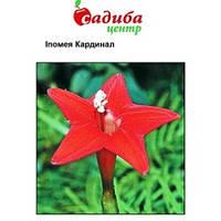 Іпомея квамокліт Кардінал червона насіння  (Hem Zaden) 0.5 г