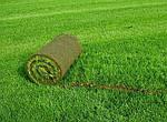 Семена травы газонной