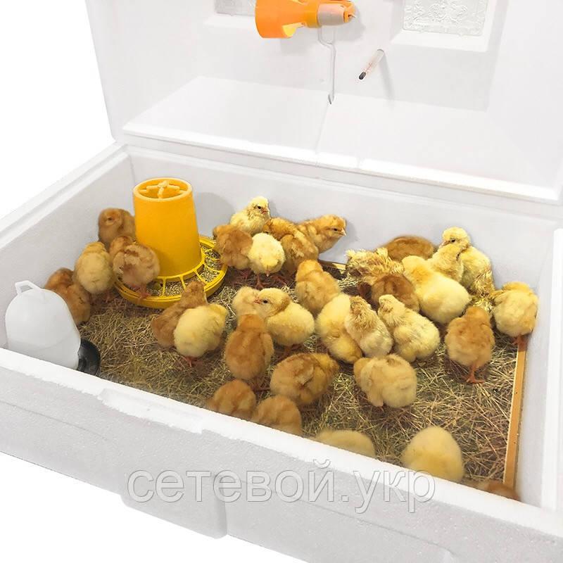 Брудер Теплуша Ясли  для цыплят, бройлеров, перепелов вместимость до 100 голов ясла