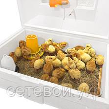 Брудер Теплуша Ясли  для цыплят, бройлеров, перепелов вместимость до 100 голов ясла, фото 2
