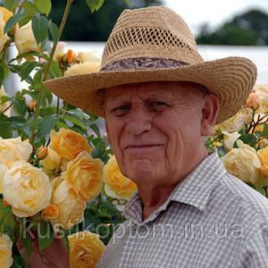 Розы Розы Дэвида Остина ( David Austin Roses. )