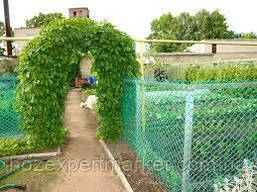 Сетка садовая пластиковая ,заборы.Ячейка 50х50 мм,рул 1х20м, фото 2