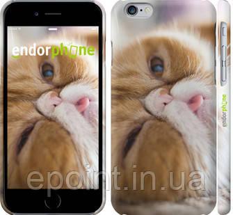 """Чехол на iPhone 6 Смешной персидский кот """"3069c-45"""""""