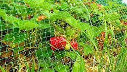 Сітка вольерная 1,5х100 м,осередок 12х14 мм (чорна,зелена).Паркани садові,пластикові сітки., фото 2