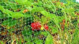 Сетка вольерная 2х100 м,ячейка 12х14 мм (черная,зеленая).Заборы садовые,сетки пластиковые., фото 3