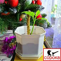 Вазон для цветов Алеана Дама 8*8 см белый 0,3л (Горшок для растений Дама с подставкой 0,3л), фото 2