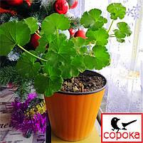 Вазон для цветов Алеана Ибис 13*11см светло оранжевый 1л (Горшок для растений со вставкой Алеана Ибис), фото 2