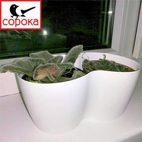 Ось фото вазона пластикового (горщика) Алеана Кактусник на 2 рослини, який призначений спеціально для висадки кактусів, фіалок, агав та інших сукулентів.