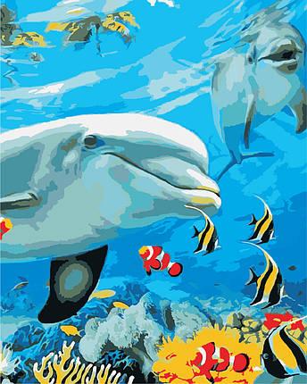 AS0868 Набор для рисования по номерам Улыбка дельфина, В картонной коробке, фото 2