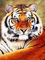 Картина за номерами Чарівний діамант Величний тигр РКДИ-0035 30х40см набір для розпису по цифрах, розмальовка