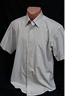 Рубашка мужская летняя, 100% хлопок, ворот 40\176, 250