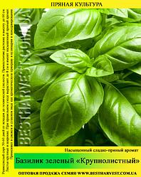 Насіння базиліка «Крупнолистовий» 0,5 кг