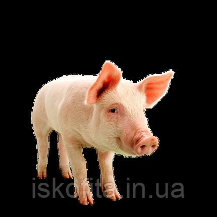 FAST PIG. Гроверный корм. 12,5% БМВД   3% премикс, фото 2
