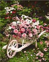 "Картина по номерам  ""Розовый куст""  40Х50см Mariposa"