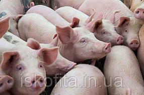 Fast Pig. Финишный корм. 7,5% БМВД   2% премикс