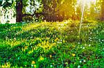 Имитация растительности в диорамостроении