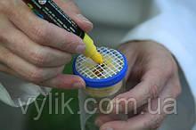 Маркер для маркировки пчелиных маток Япония.