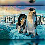 Алмазная вышивка Пингвины 30x40 The Wortex Diamonds (TWD20021), фото 2