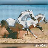 Алмазная вышивка Две лошади 40x50 The Wortex Diamonds (TWD20030L), фото 2